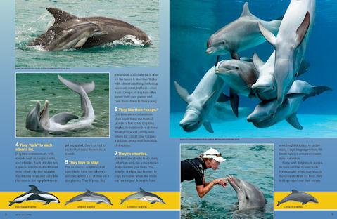 dolphins spread 2
