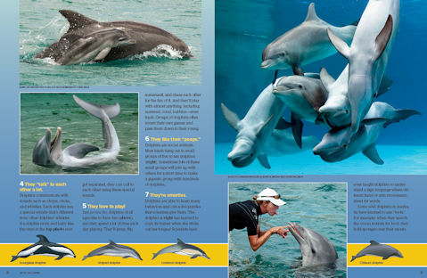 dolphins spread 2