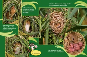 harvest mice spread 2