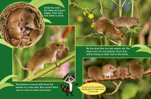 harvest mice spread 3