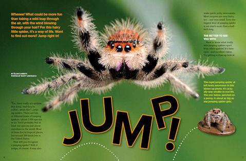 jumping spider spread 1