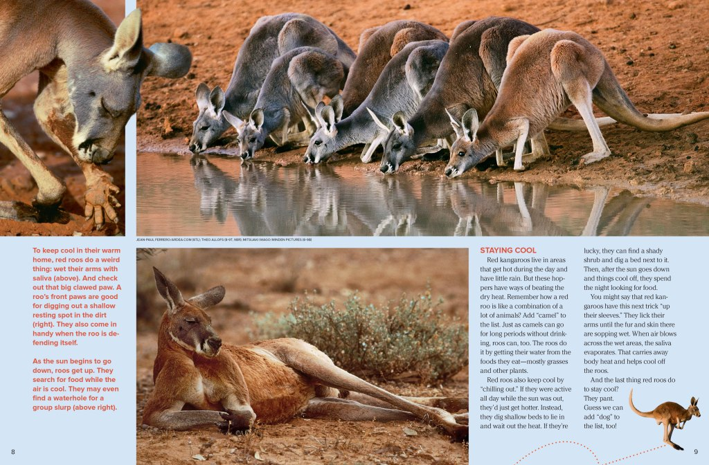 red_kangaroo_page2