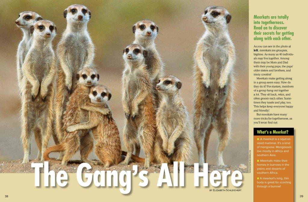meerkats spread 1