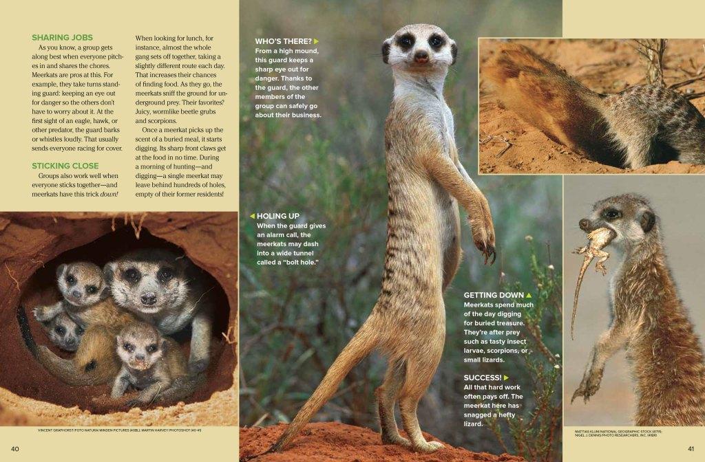 meerkats spread 2