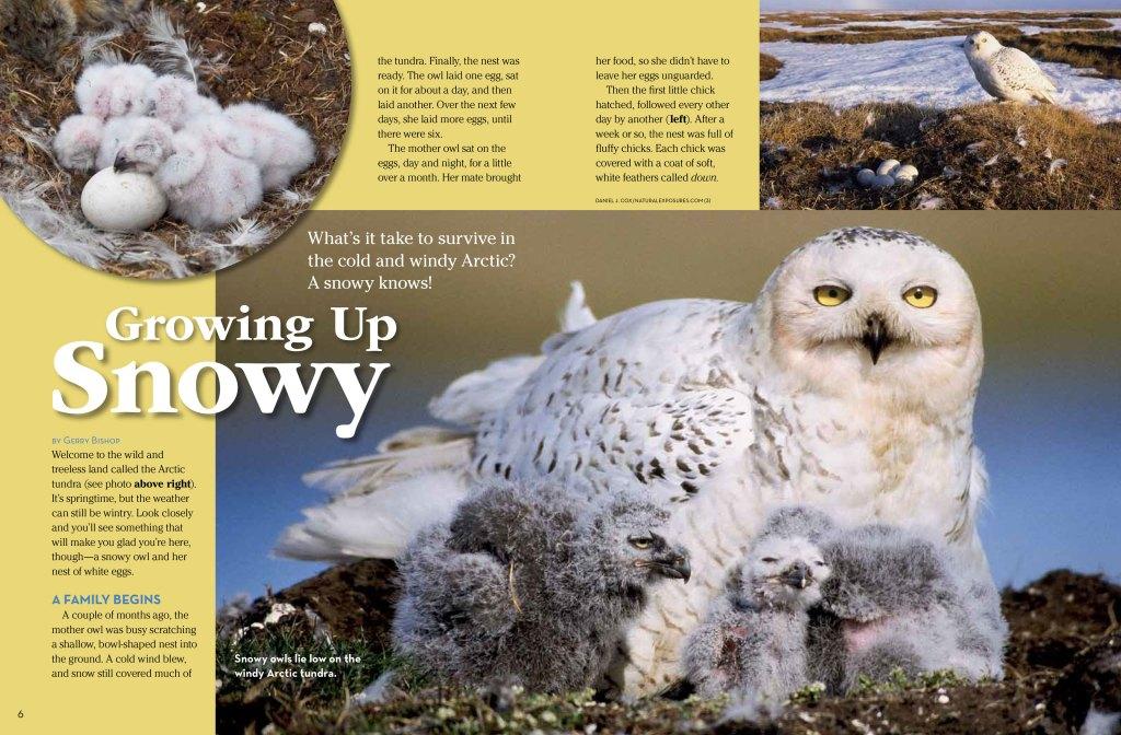 snowowl spread 1