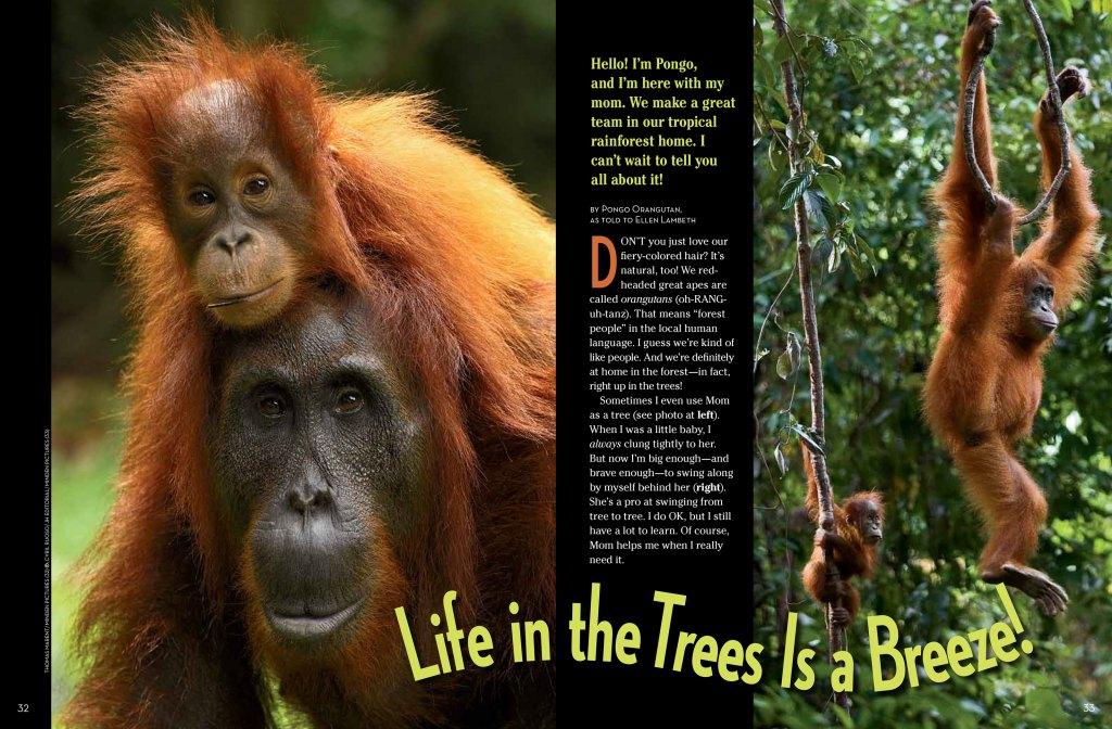 Orangutans-spread-1