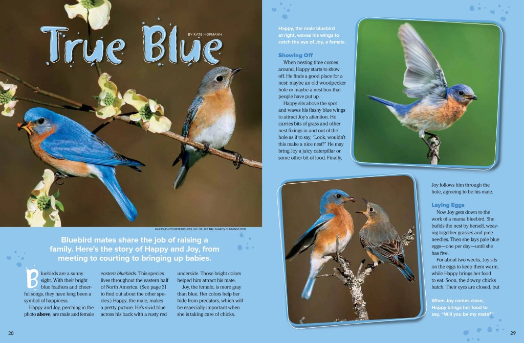 bluebird spread 1