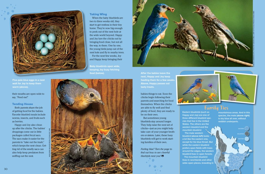 bluebird spread 2