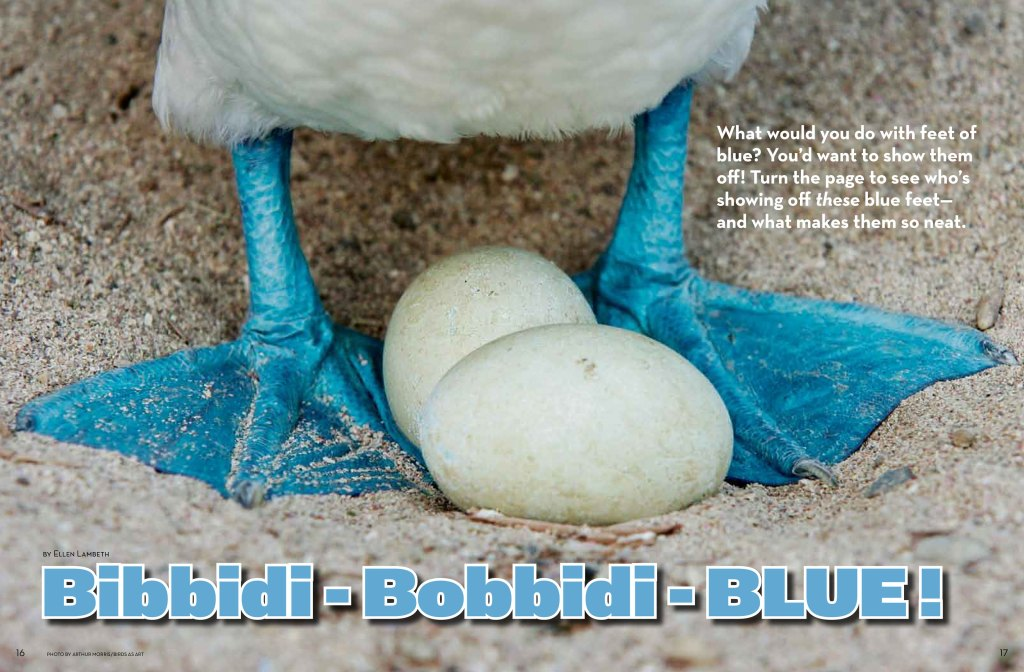 blue footed spread 1
