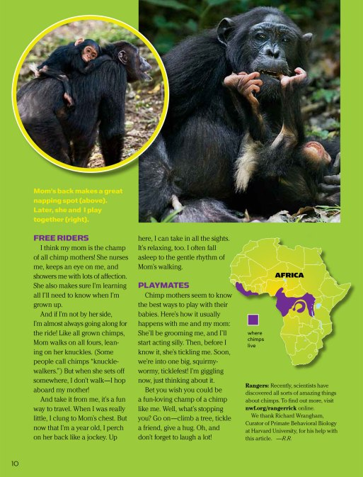 chimp spread 4