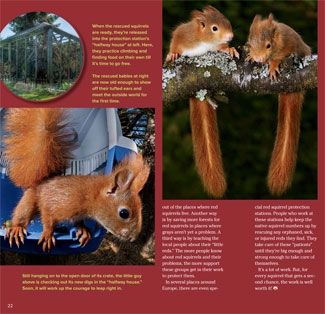 redsquirrel spread 3