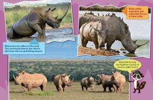 rhino spread 3