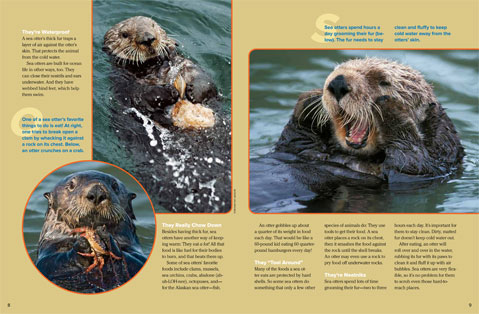 SeaOtter spread 2