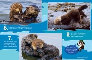 otter spread 3