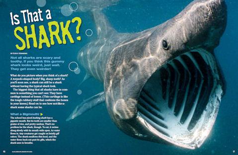 shark spread 1