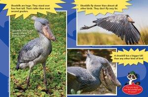 shoebird spread 2