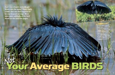 birds spread 1
