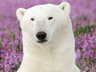 featured arctic