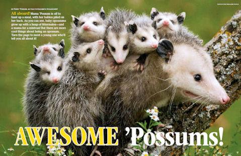 Opossums - NWF | Ranger Rick