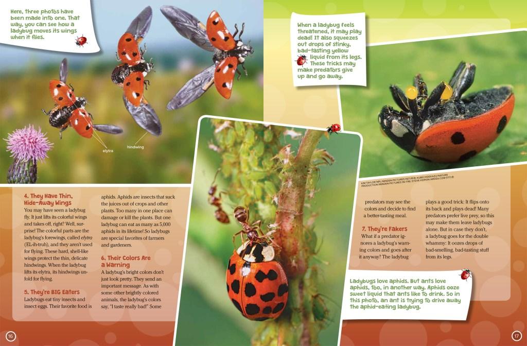 Ladybug Aug 2018 RR-2