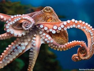 octopus 1156x650_Reinhard Bruckner