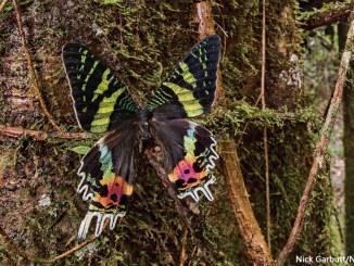 Moths by NICK GARBUTT natureplcom 1156x650