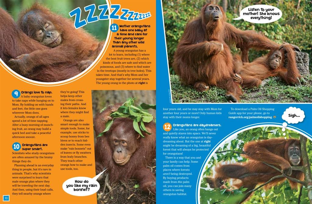 Orangutans Oct 2018 RR