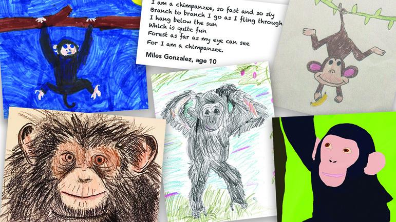 Zooworks Chimpanzees