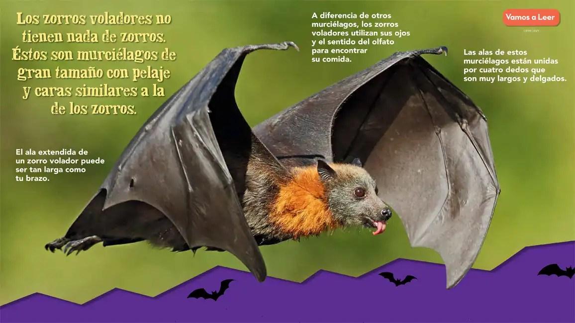 Volado por Zorros Voladores