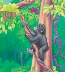 A chimpanzee climbing a vine