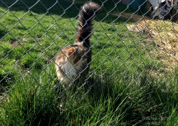 Even cats behind fences are fair game.