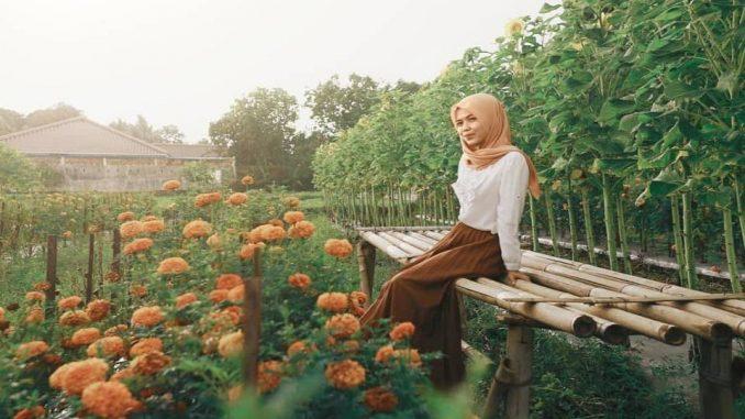 Kebun Bunga Matahari Rempoah
