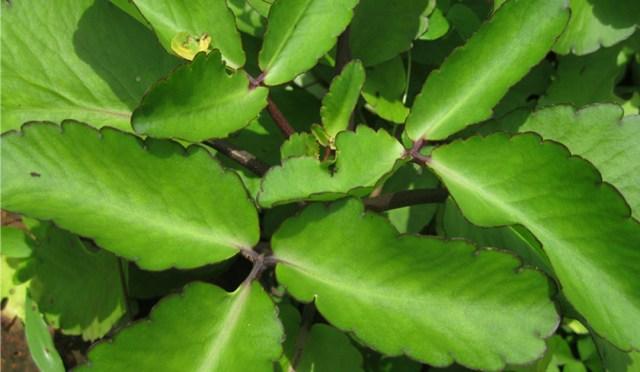 patharkuchi