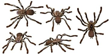 Harmless Helper or Poisonous Foe?: A Guide to Identifying Deadly Spiders