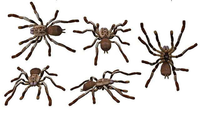 Identifying Deadly Spiders