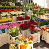Guidelines for Choosing the Perfect Florist in the Heart of Penrith