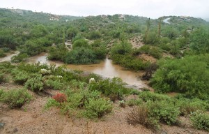 Colony Wash - Fountain Hills