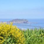 菜の花とイタンキ浜