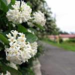 天沢小学校近辺の風景