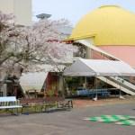 桜めぐり 2010(青少年科学館)