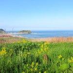 菜の花とイタンキ浜 2014