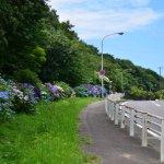 紫陽花のある風景(港南町入口近辺)
