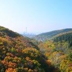 陣屋新橋から見た紅葉 2015