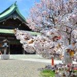 桜めぐり 2016 (室蘭八幡宮)