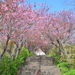 桜めぐり 2016 (天沢小学校)