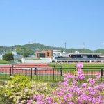 入江運動公園のツツジ 2017