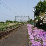 みさき駅の芝桜