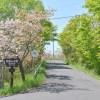 桜のある風景 2019