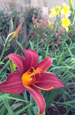 I'll often come across a familiar flower with new coloration