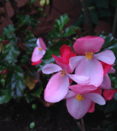 Nairobi-Flowers-Rantatonne00050